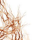 Human nerve system Royalty Free Stock Photo