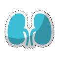 Human organ kidneys icon