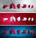 Human organs banners heart liver kidneys stomcah and lungs banner set three colors red blue and light grey Royalty Free Stock Photography