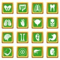 Human organs icons set green