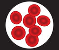 Human red blood cells vector illustration Royalty Free Stock Photo