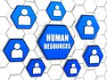 Human resources and person signs in blue hexagons words d cellular structure business concept Royalty Free Stock Photography