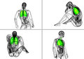 human respiratory syste