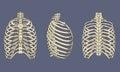 Human Rib Cage Skeletal Anatomy Pack Royalty Free Stock Photo
