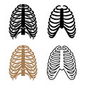 Human rib cage symbols illustration for the web Royalty Free Stock Photo