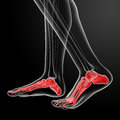 Human Skeletal  Feet Royalty Free Stock Image