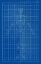 Human skeleton on blue paper Royalty Free Stock Photo