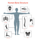 Human Skeleton and Part Set for Card or Poster. Vector