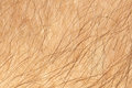 Human skin with hair close up Stock Photos