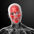 Human skull anatomy d render close up Stock Photography