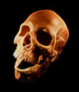 Human skull fractal art digital representing halloween scary concept Stock Photo