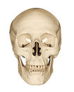 Human skull isolated on white Royalty Free Stock Photo