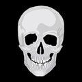 Human skull model. Royalty Free Stock Photo