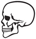 Human skull profile skull profile side skull Royalty Free Stock Photos