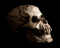 Human skull prop on black background an aged and weathered looking extruding from shadow a Stock Image