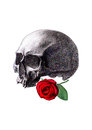 Human skull and red rose on white background