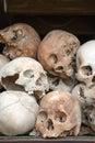 Human Skull Series 02 Royalty Free Stock Photo