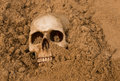 Human skull small half buried in the desert sand Stock Image