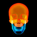 Human skull upper half with black background front view Royalty Free Stock Images