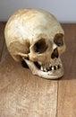 Human skull on wood Royalty Free Stock Photo