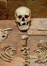 Human skulls and skeletal parts