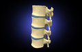 Human spine digital illustration of in colour background Stock Photos