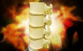 Human spine digital illustration of in colour background Stock Photography