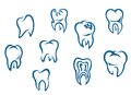 Human teeth set Stock Image