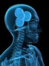 Human x-ray head with gears Royalty Free Stock Photography