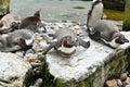 Penquins Humboldt Basking In T...