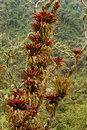 Humid andean moor landscape in oyacachi ecuador beautiful natural Stock Image