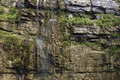Humid cliff the close up of with many grass Stock Photo