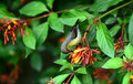 Humming bird Royalty Free Stock Photo