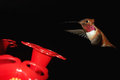 Humming bird in flight at a feeder on the porch of home at christina lake bc canada Royalty Free Stock Photography