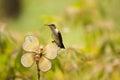 Humming bird on garden fixture resting a Stock Image