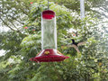Humming Bird Mid-flight To Feeder Royalty Free Stock Photo