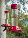 Humming Bird Perched on a Bird Feeder Royalty Free Stock Photo
