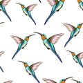 Humming birds. Seamless pattern of exotic tropical humming bird. Hand drawn illustration.