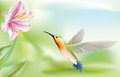 Hummingbird bird flying to a flower drawing Royalty Free Stock Images