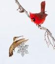 Hummingbird carrying snowflake Christmas ornament Stock Photography
