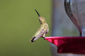 Hummingbird defending nectar feeder at for Royalty Free Stock Images