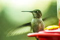 Hummingbird feeder back yard flying in for some nectar close up macro type picture Royalty Free Stock Photo