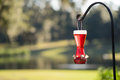 Hummingbird feeder without birds full of red nectar with bees on the bottom hanging from a metal pole stand holder Stock Image