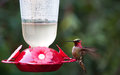 Hummingbird at feeder with blurred wings Stock Image