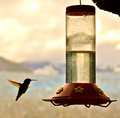 Hummingbird and feeder flies toward the Royalty Free Stock Images