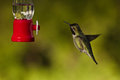 Hummingbird and feeder side view of hovering next to a bird Stock Photo