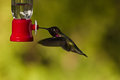 Hummingbird and feeder side view of hovering next to a bird Stock Photos