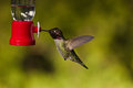 Hummingbird and feeder side view of hovering next to a bird Royalty Free Stock Photography