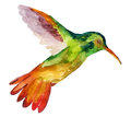 Hummingbird in flight  on white background Royalty Free Stock Photo
