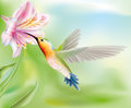 Hummingbird in the flower bird flies inside illustration Royalty Free Stock Photos